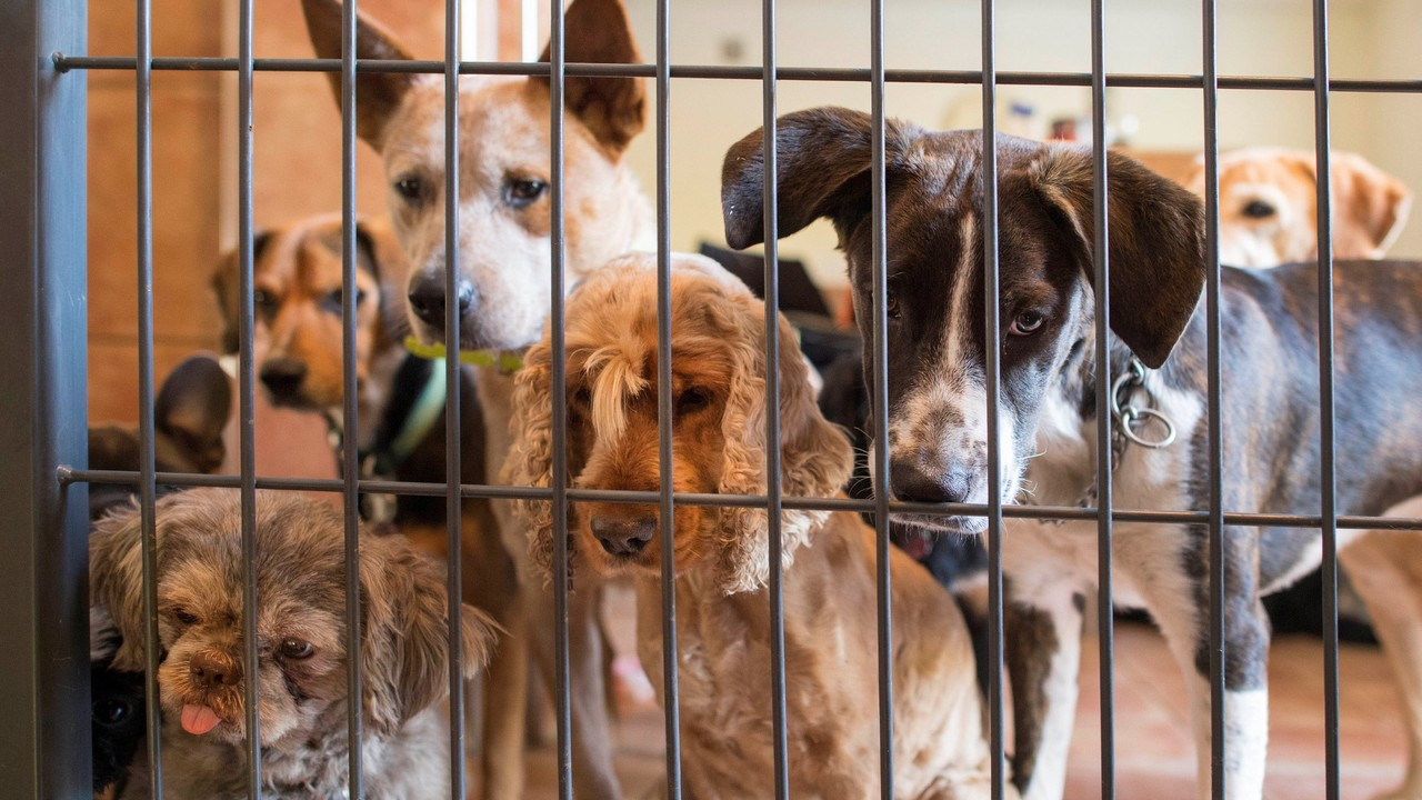 Top 10 Reasons to Adopt from an Animal Shelter