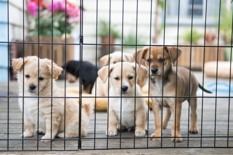 You're helping to abolish mass-cruelty